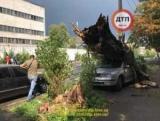 В Киеве дерево, крыша автомобиля легко