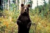 Российские медведи начали жить по православному календарю